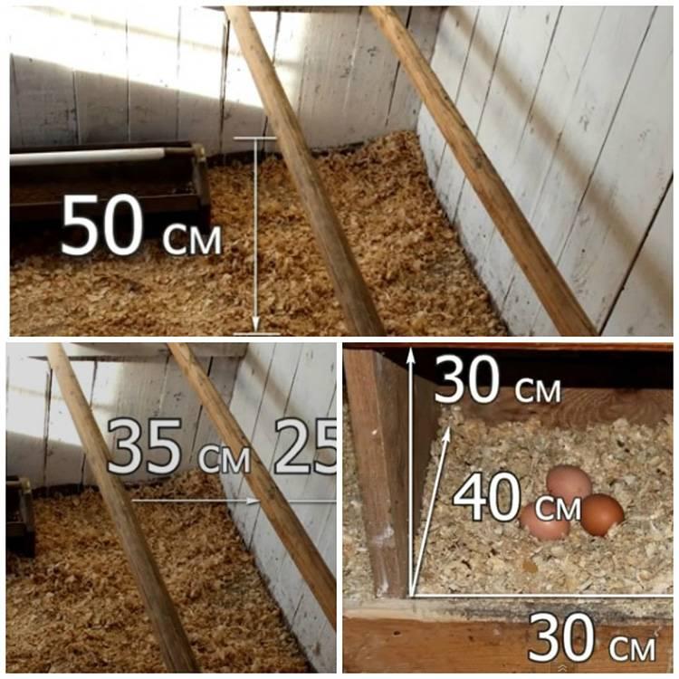 Строительство курятника сколько стоит и что нужно?