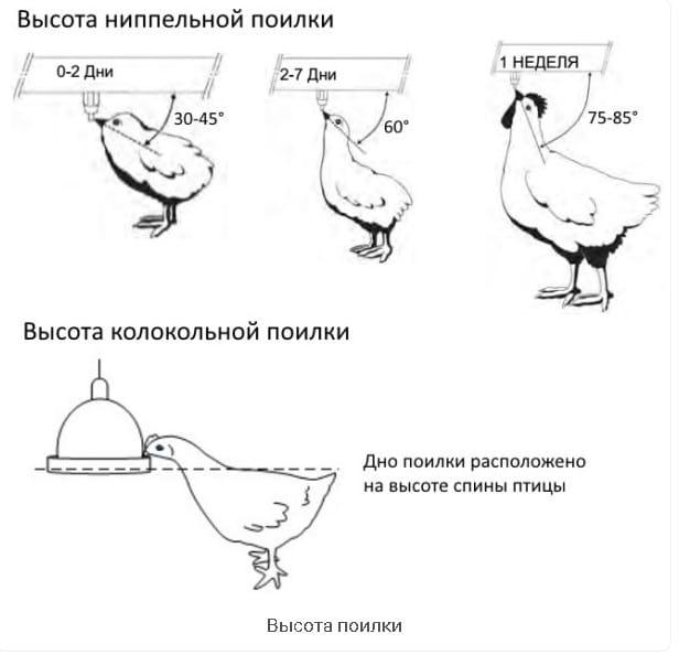 Как сделать поилку для гусей своими руками