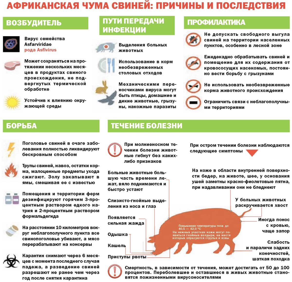 Амидостомоз у кур: симптомы, диагностика, лечение, меры профилактики, препараты