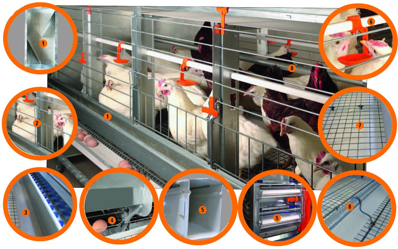Оборудование курятника и микроклимат для несушек