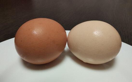 Цветные яйца – цвет скорлупы и цвет желтка влияет на вкус?