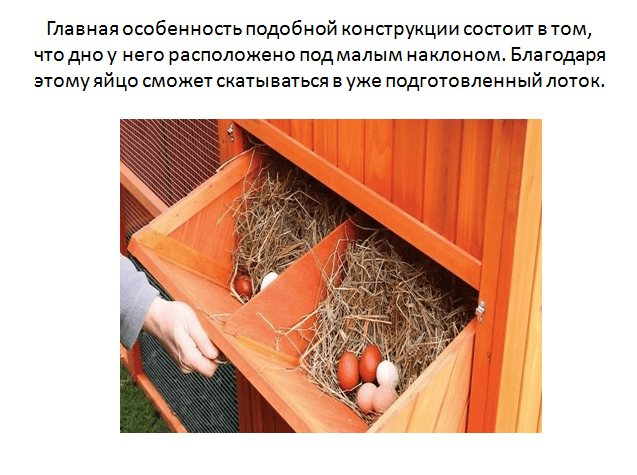 Травы и цветы для кур несушек в гнезде и курятнике