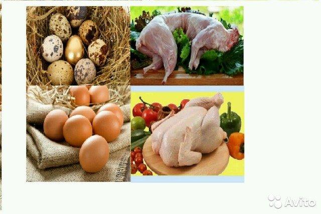 Делавэр - мясо-яичная порода кур. Описание, характеристики, содержание и уход, кормление