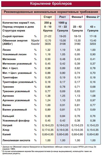 Бройлерные утки — характеристики самых распространенных