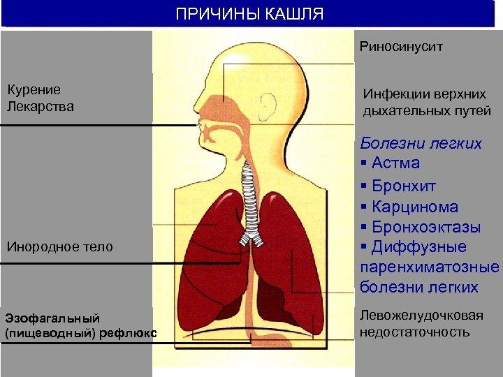 Куры хрипят и чихают: что делать, как и чем лечить? Заболевания, симптомы, препараты, профилактика