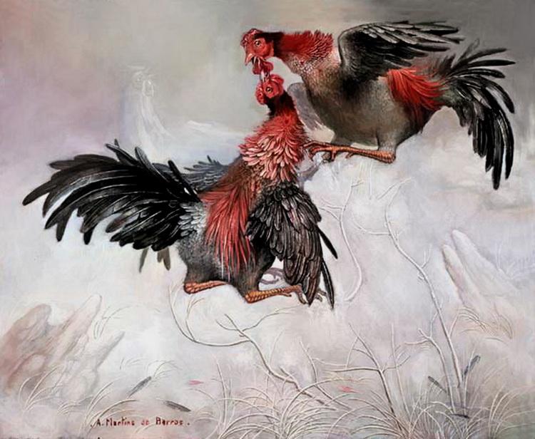 Английская - бойцовая порода кур. Описание, характеристика, содержание, кормление, инкубация, отзывы