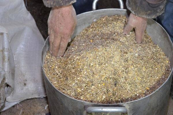 Пшеница и ячмень для кур несушек: как прорастить, запарить зерно, как правильно давать
