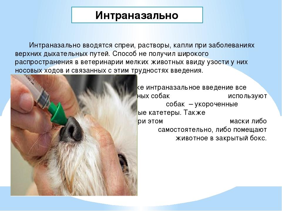Лечение кур и цыплят водкой: как правильно поить, дозировка