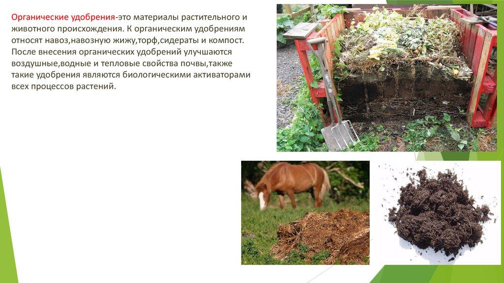 Как применять куриный помет в качестве удобрения: как приготовить подкормку для растений? Состав, правила использования и хранения