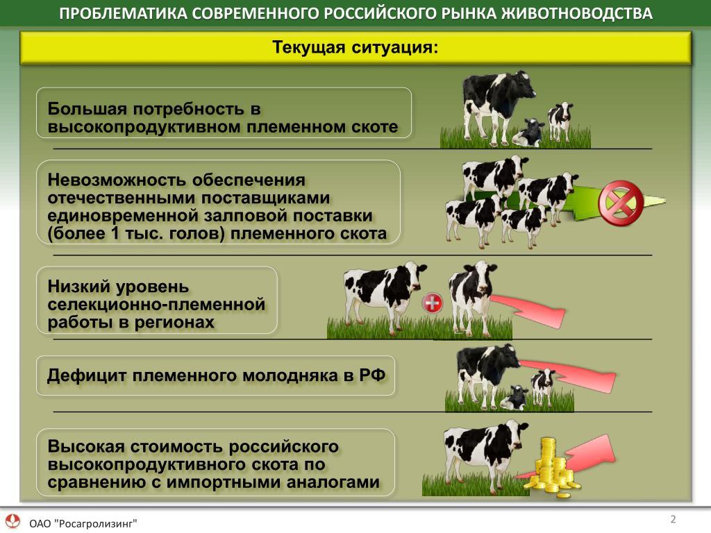 Куры Родонит - яичный кросс. Описание, характеристика и продуктивность, особенности кормления