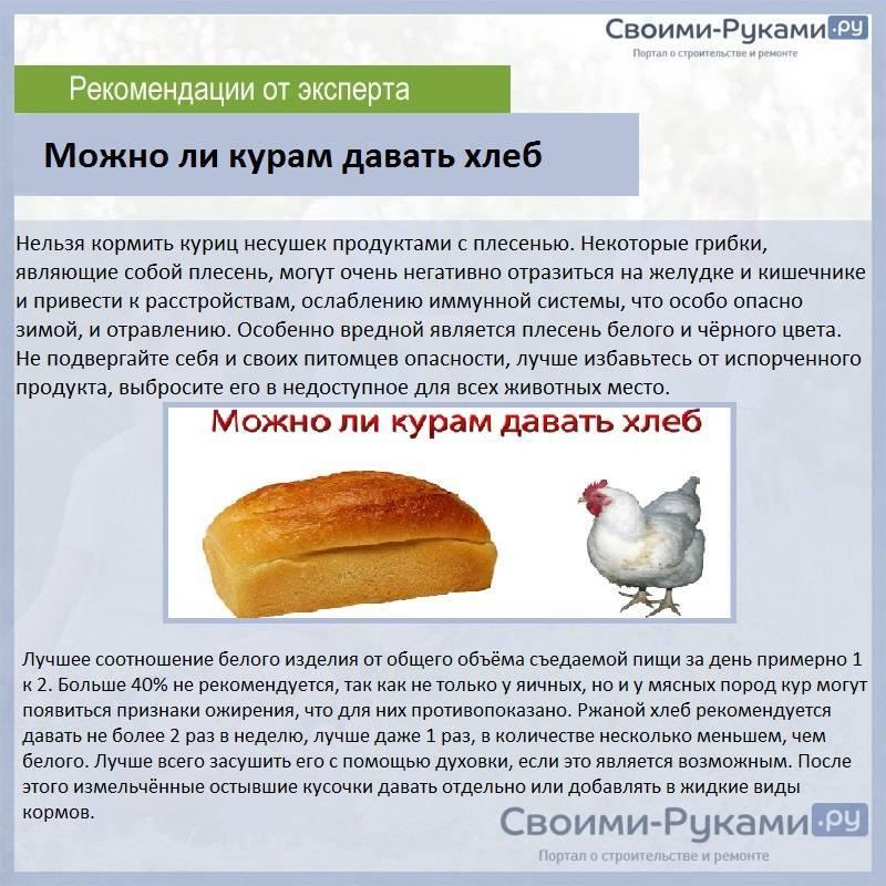 Практические аспекты или советы по содержанию кур