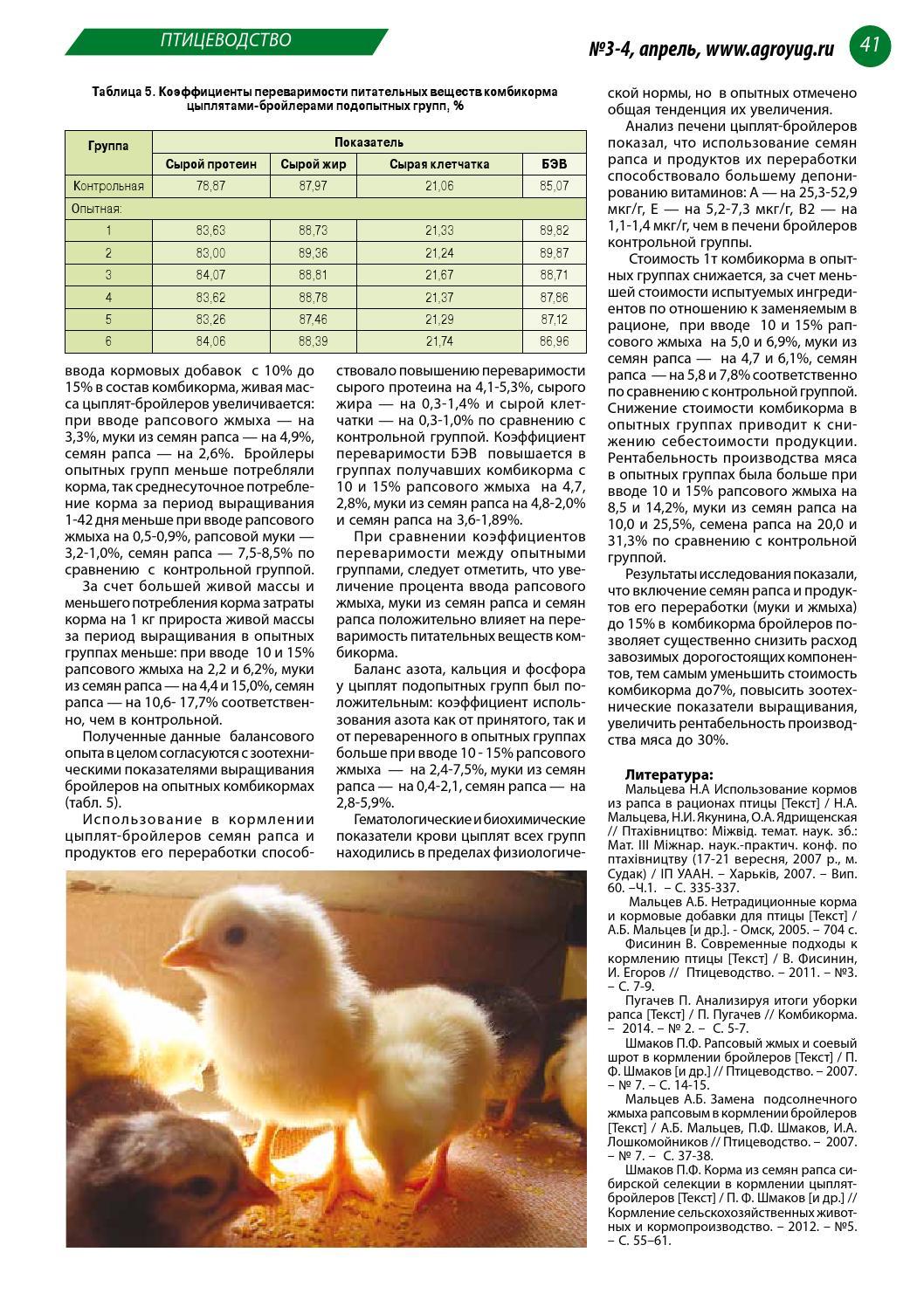 Как откормить бройлеров: составление меню цыпленка