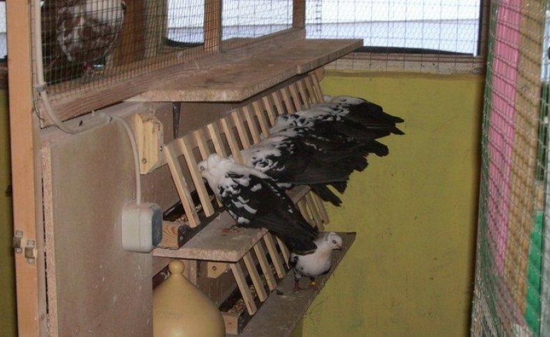 Делаем удобные кормушки и поилки для голубей