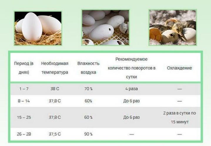 Сколько гуси несут яиц в год