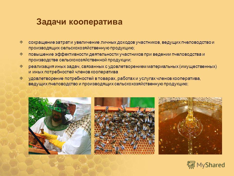 Пчеловодство как домашний бизнес