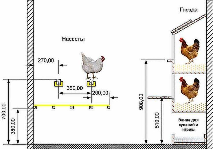 Пошаговая схема разведения кур