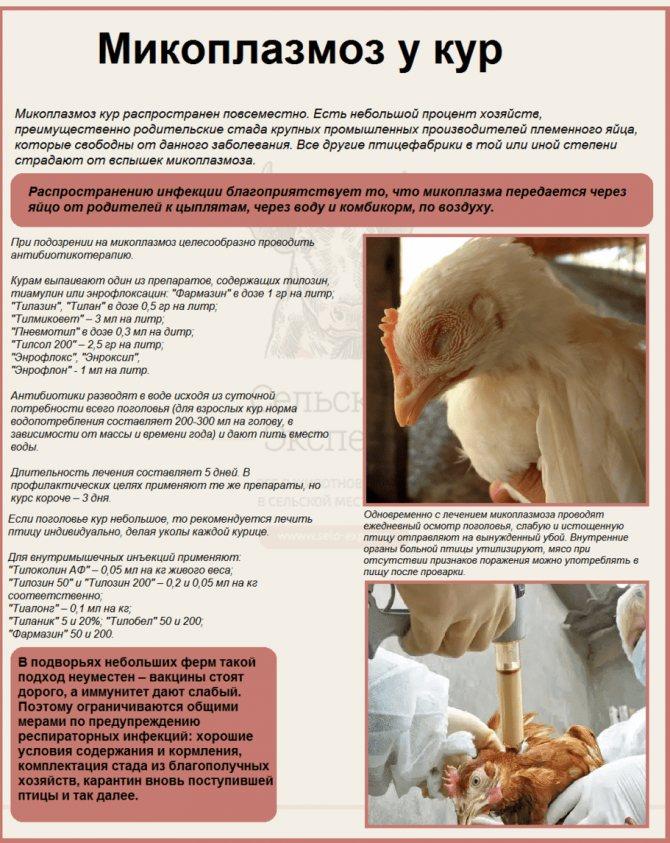 Энростин: инструкция по применению для цыплят бройлеров, взрослых кур и несушек