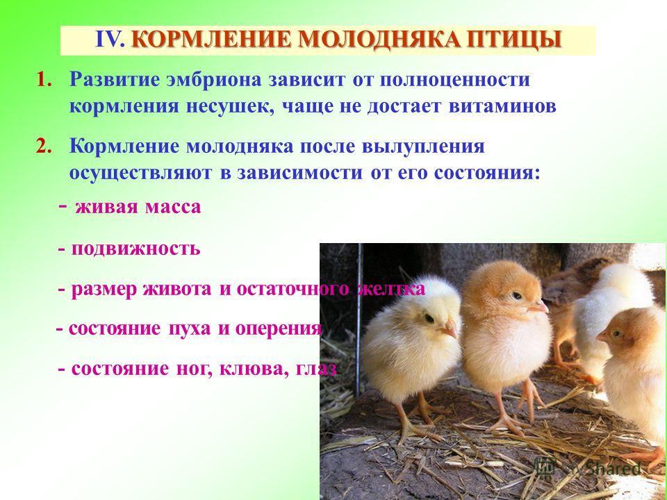 Птичий язык и терминология куриного царства