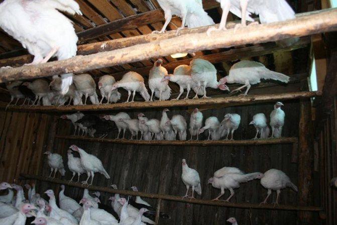 Современное содержание птицы в домашних условиях