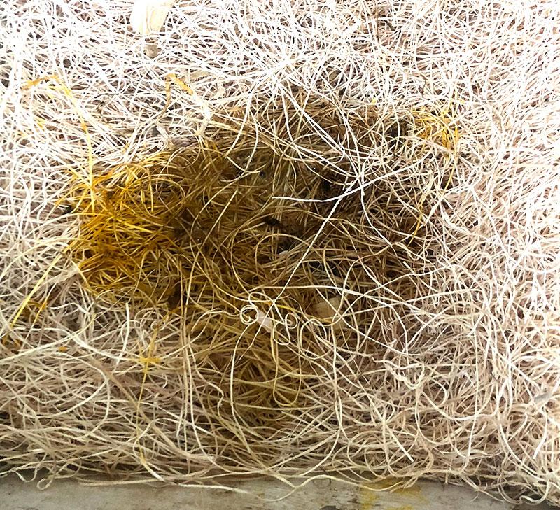 Куры расклевывают и поедают яйца – причины и решение проблемы