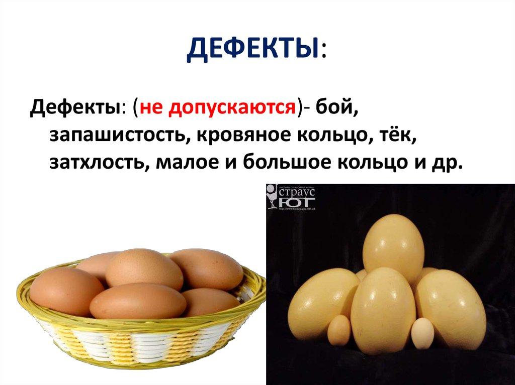 Яйца страусов – сколько они весят, как долго варятся, сколько яиц несет птица