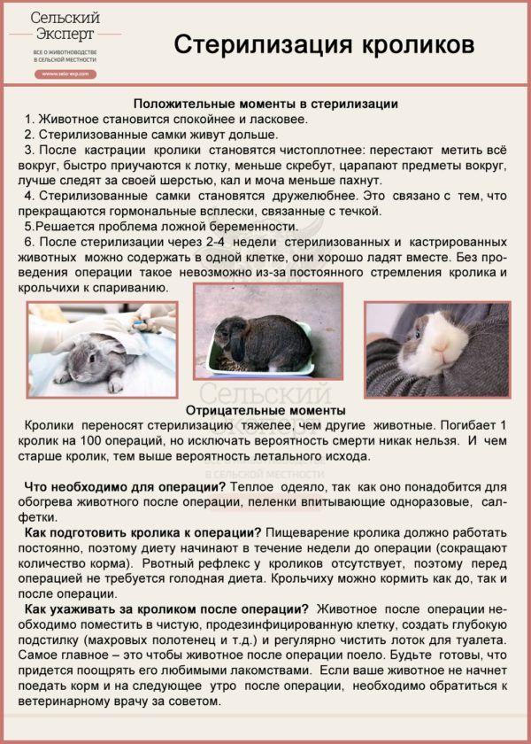 Можно ли содержать кур и кроликов вместе в одном помещении? Трудности и подготовка помещения