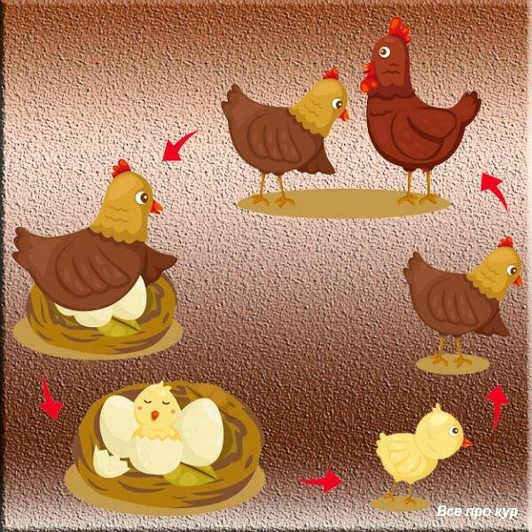 Про яйца и несушек — 65 фактов и один вопрос к вам!