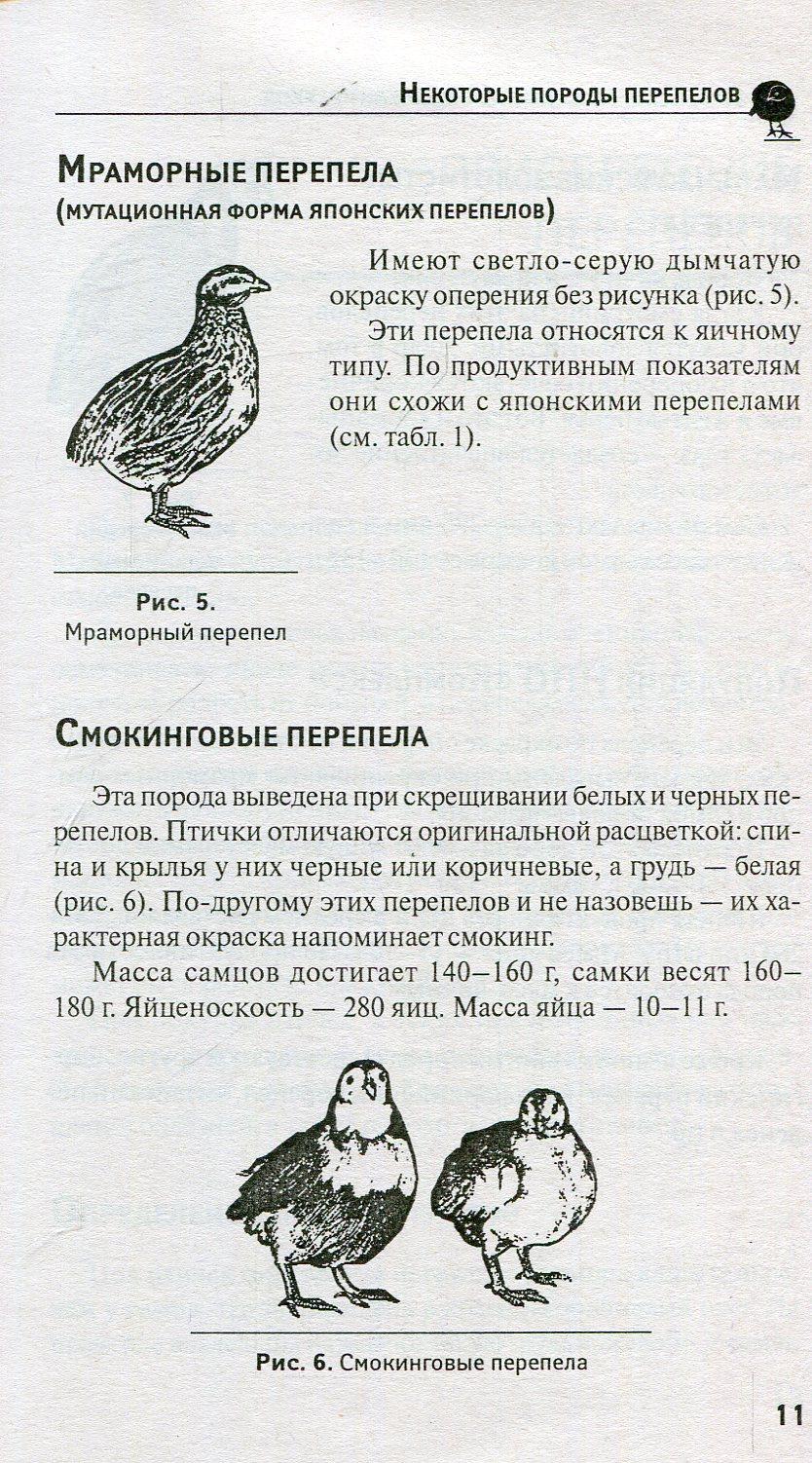 Смокинговый перепел – описание внешнего вида, особенности породы