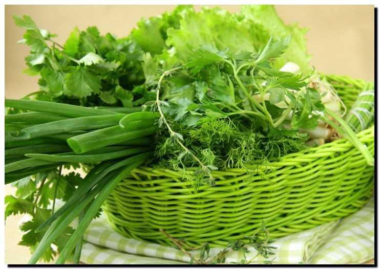 Трава и зелень в кормлении кур