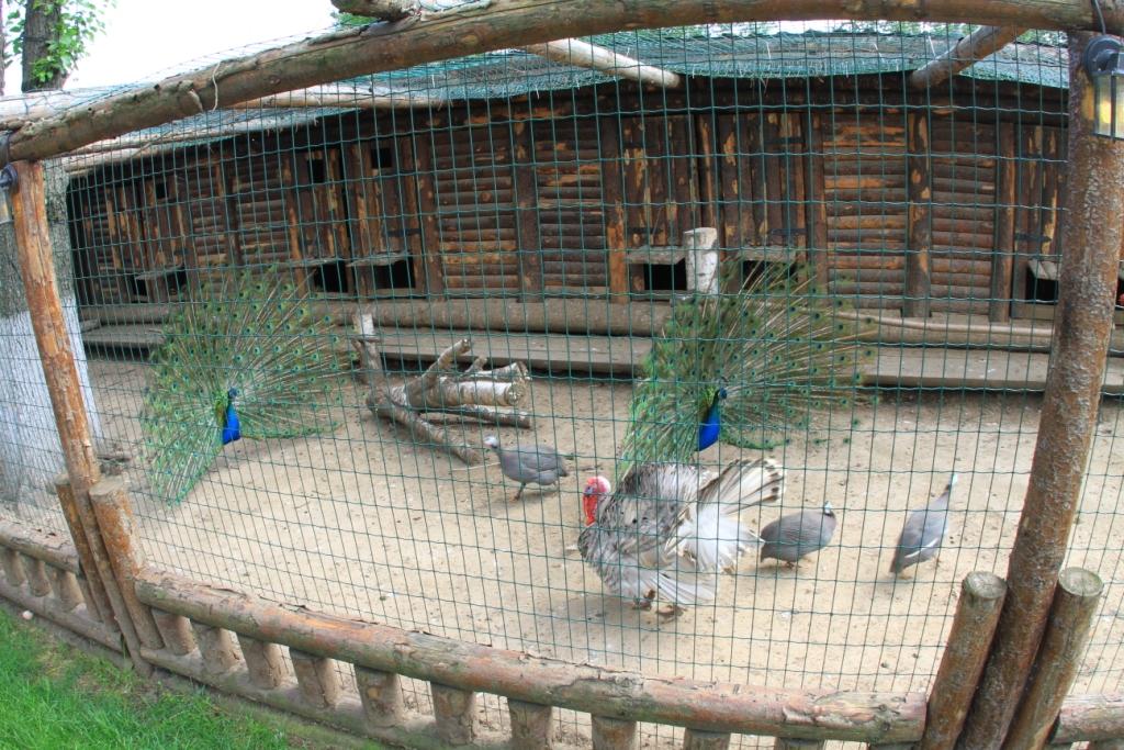 Разведение домашней птицы