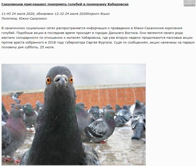Рацион питания голубей: что можно давать, а что нет