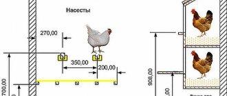 Сколько кур нужно на одного петуха?