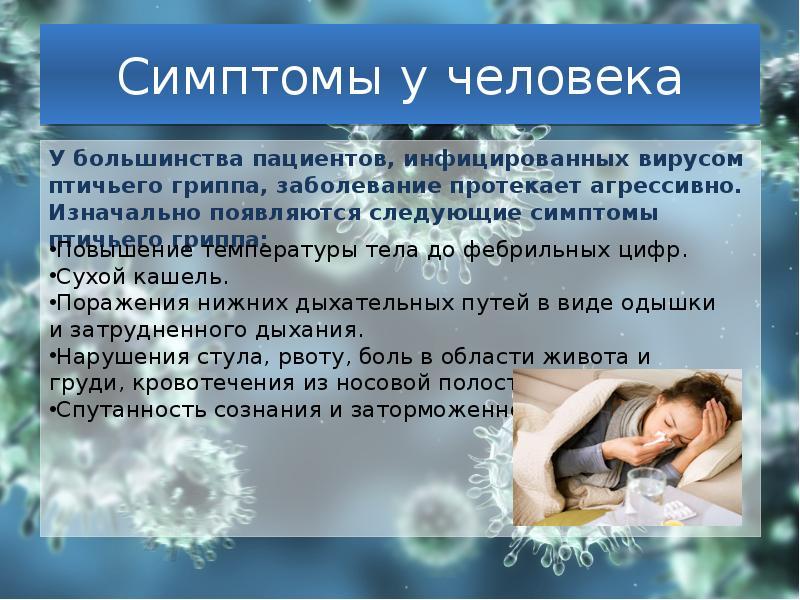 Птичий грипп опасен для человека? Симптомы и лечение.