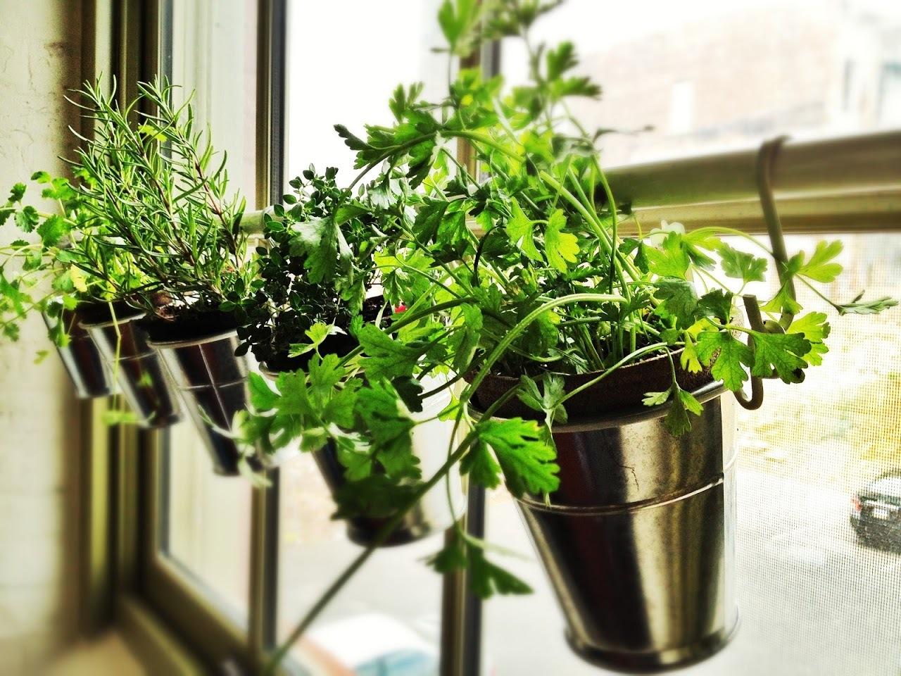Как вырастить 5 полезных растений на подоконнике