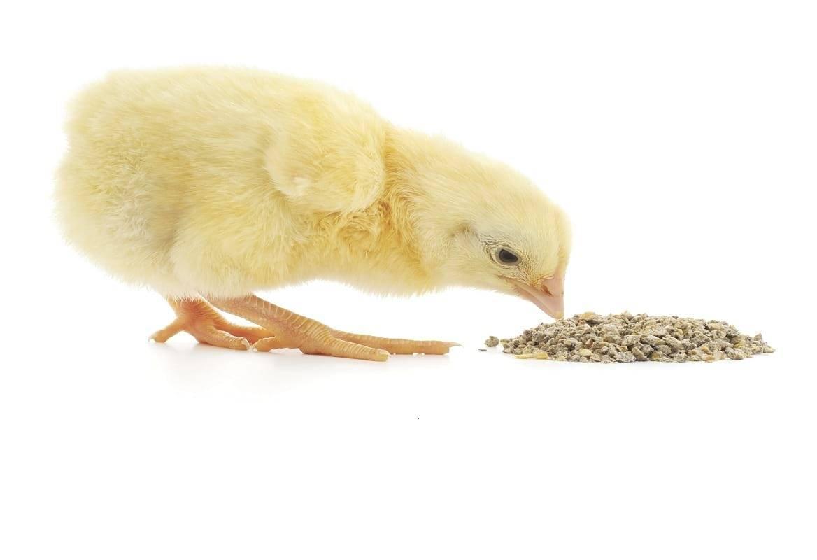 Комбикорм своими руками для кур несушек и цыплят