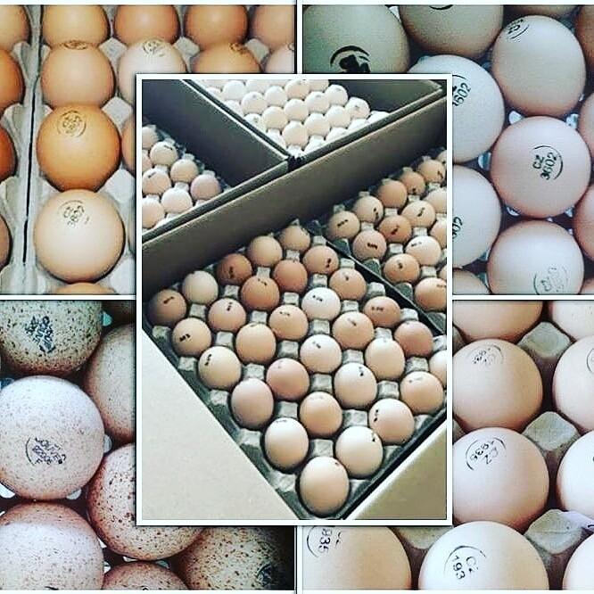 Где купить и как правильно выбирать инкубационное яйцо и птицу