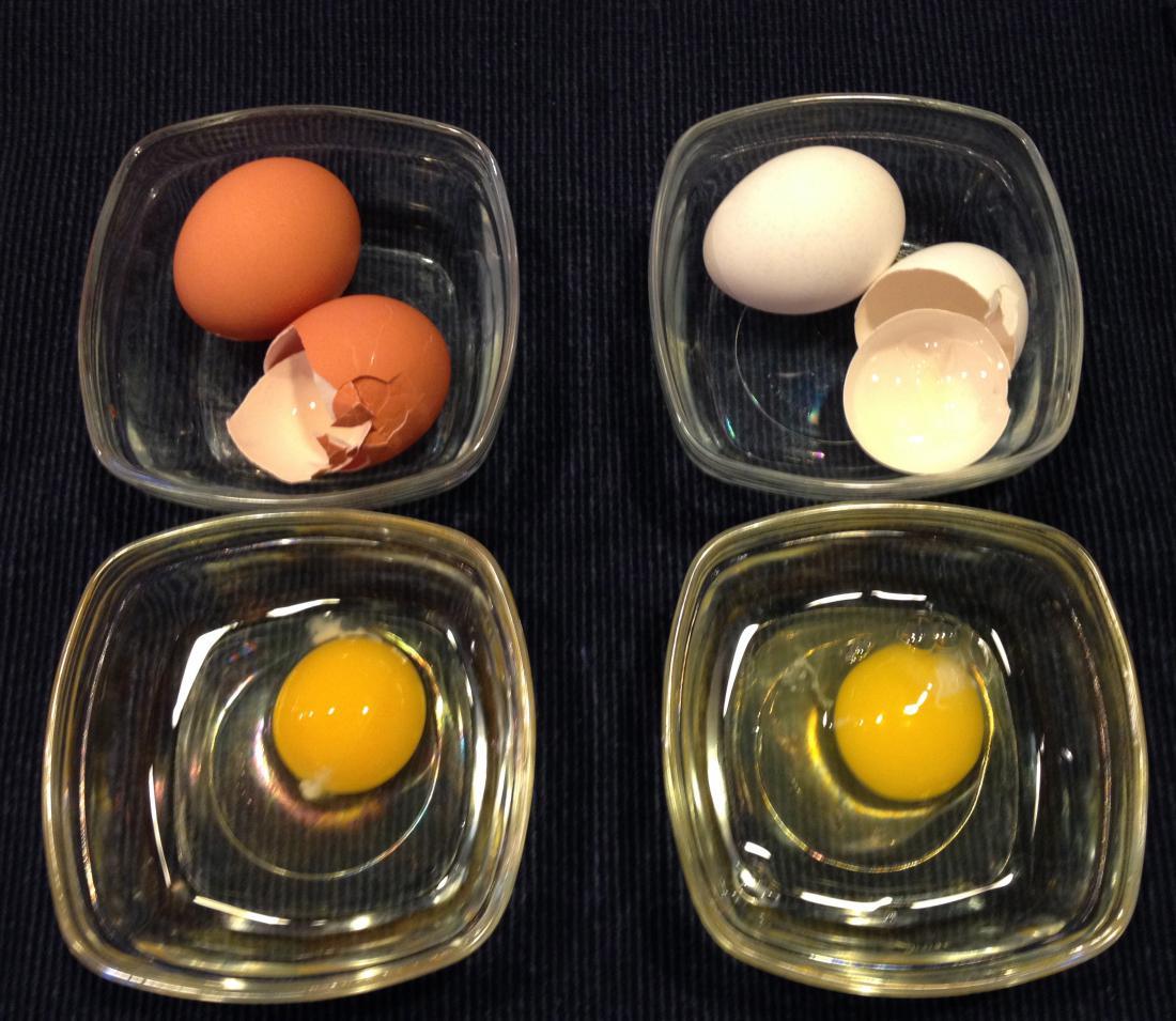 Яйцо с кровью — почему кровь в курином яйце?