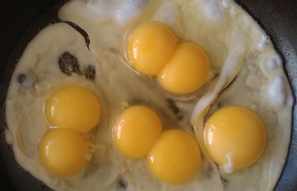 От чего зависит цвет скорлупы куриного яйца и о чем говорит цвет желтка?