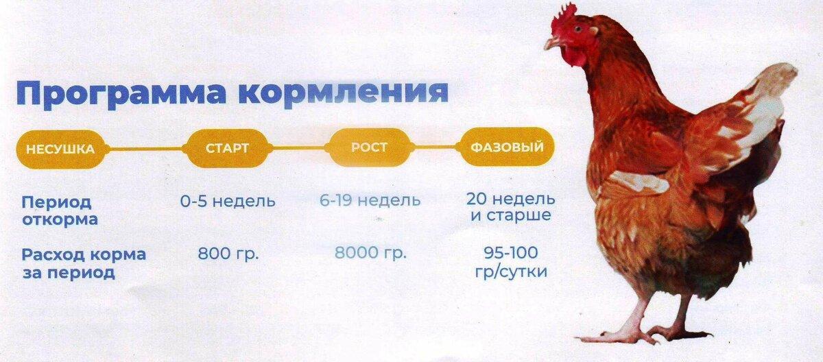 Быстрая прибыль на курах несушках для Украины