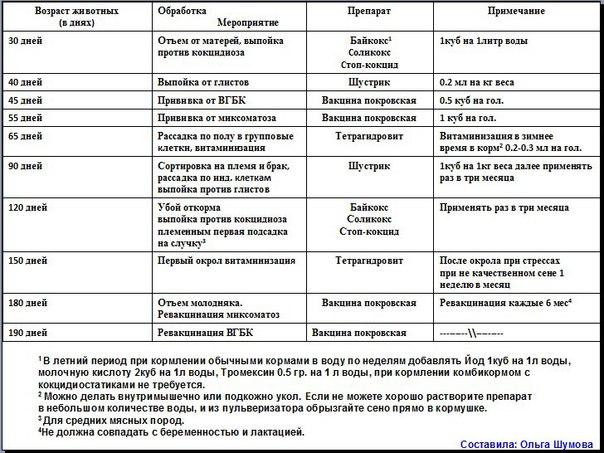 Глисты у бройлеров: симптомы, лечение, препараты и меры профилактики