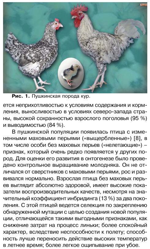 Пушкинские куры — фото и описание, отзывы