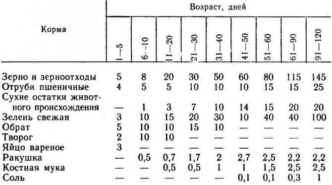 Особенности содержания бройлеров в домашних условиях