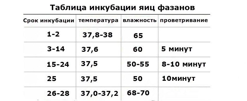 Сколько дней высиживает яйца цесарка