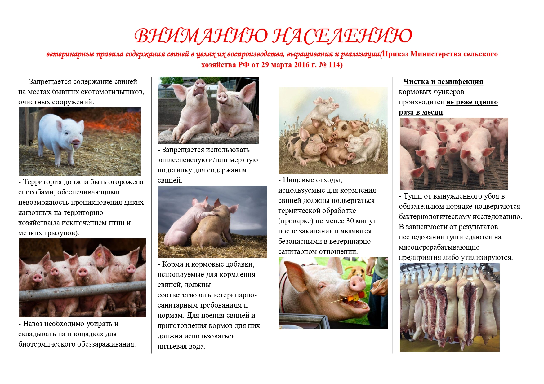Санитарно-ветеринарные требования содержания птицы в частных крестьянских хозяйствах
