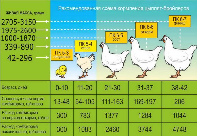 Руководство по кормлению цыплят и кур для сбалансированной диеты в любом возрасте