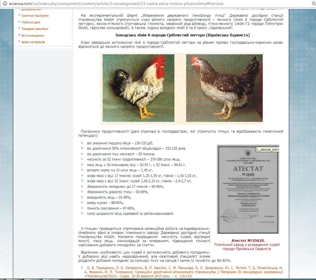 Порода кур Анкона – описание, фото и видео