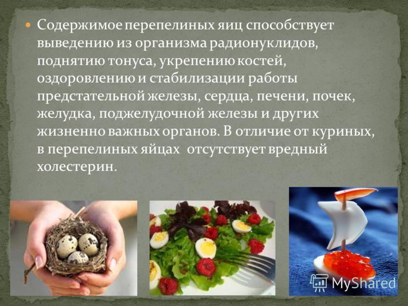 Яйца перепелки – в чем заключаются польза и возможный вред