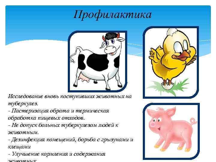 Денагард 45% – инструкция по применению в ветеринарии, свойства препарата
