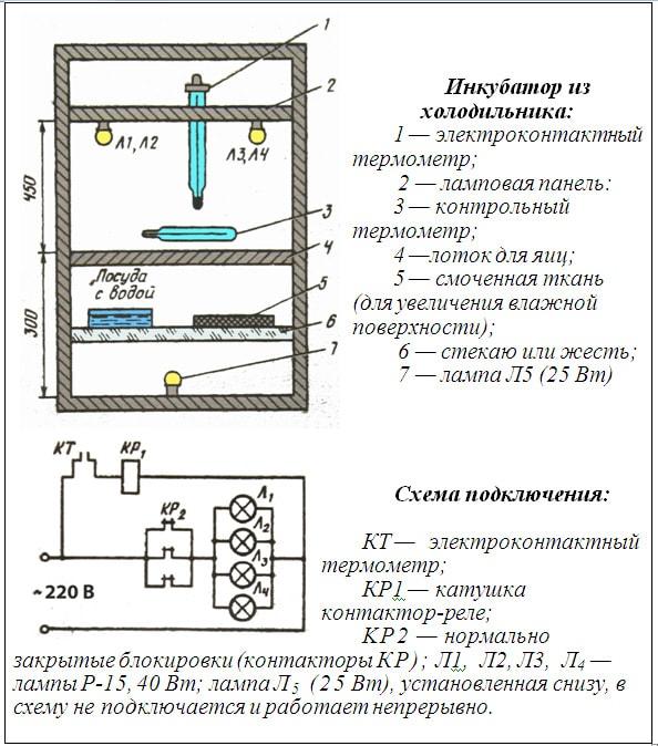 Делаем инкубатор своими руками: виды и особенности конструкций