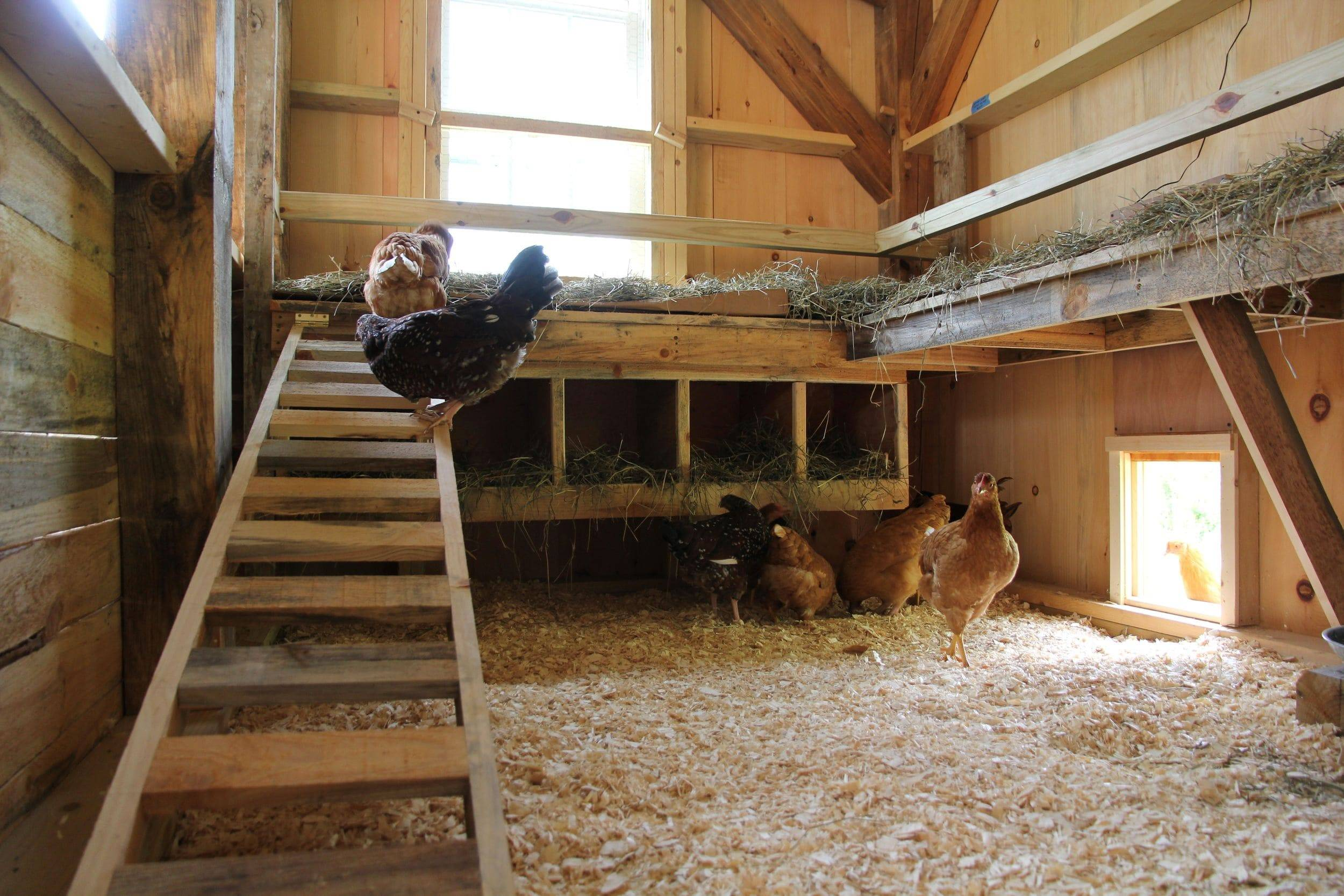 Как организовать домашнюю птицеферму
